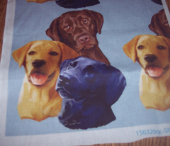 Labrador Retriever Three colors