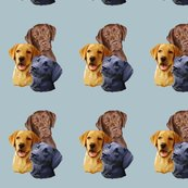 640004_rlabrador_retriever__3_heads_shop_thumb