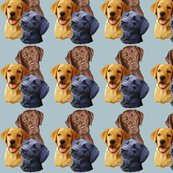 Rlabrador_retriever__3_heads_shop_thumb