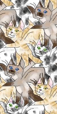 Flying kittens