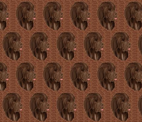 Brown Newfy portrait