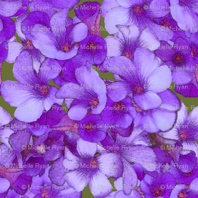 Wood Sorrel - Blueish Purple