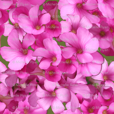 Pretty Pink Wood Sorrel