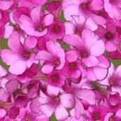 Rrrrrmini_pink_b_flowers_shop_thumb