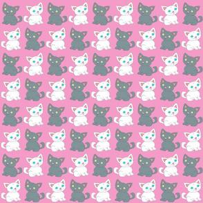Dax & Max Kittens Pink