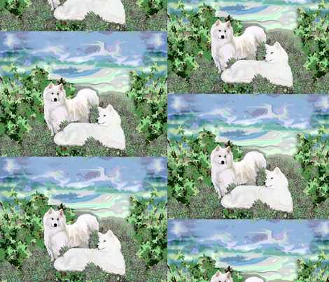 Samoyeds on a summer day