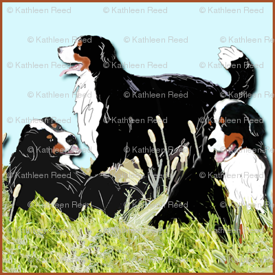 BERNESE MOUNTAIN DOGS IN THE GRASS