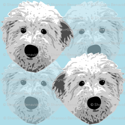 English_sheepdog_1