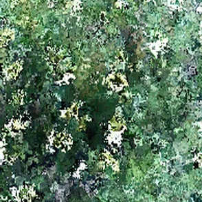 paddock_flowers