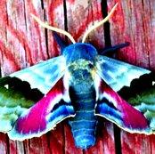 Rrrrbeautiful_moth_ed_ed_shop_thumb