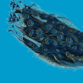 peacock1jpg-ch-repeed