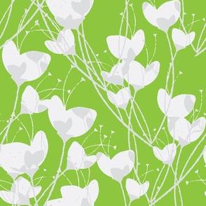 Primrose Green Background