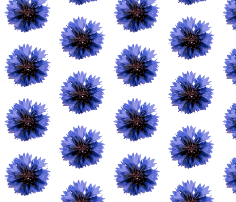 cornflower-ed fabric by miss_blümchen on Spoonflower - custom fabric