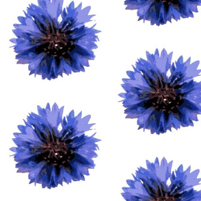 cornflower-ed