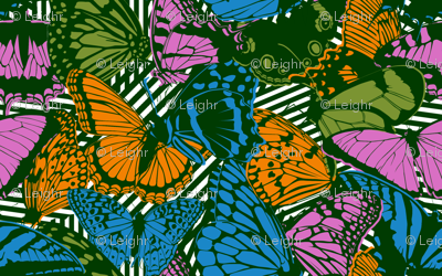 Chaos & Butterflies