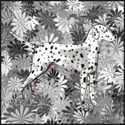 I'm Seeing Spots Dalmatian