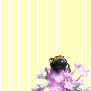Bee on White & Yellow