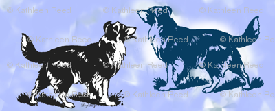 border collies on blue