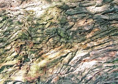 Gnarled Tree Bark 1 L