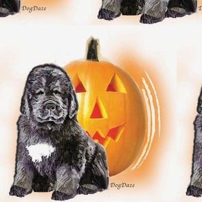 halloween_newf_puppy