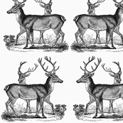Vintage Deer-- Black
