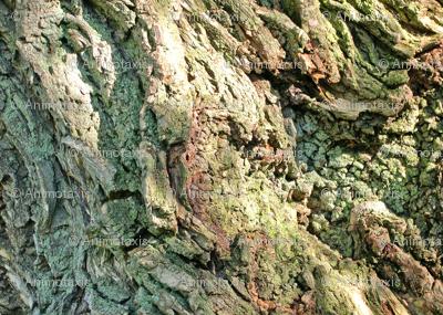 Gnarled Tree Bark 2 L