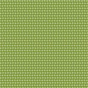 Snail on Green Moss