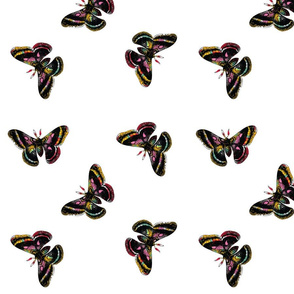 Flying Moths Print