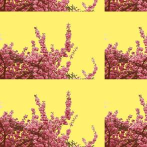 Cherry blossom pink-vanilla
