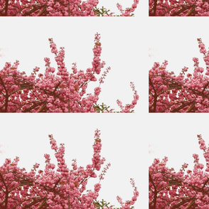 Cherry blossom pink-white