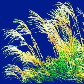 Sparkling Meadowlands Grasses