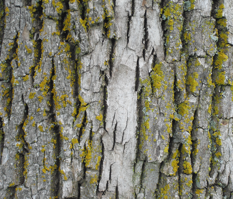 Mossy Bark fabric by ames3 on Spoonflower - custom fabric