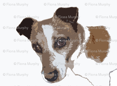 Jack Russell Dog  Head photo sketch, white, russet,black