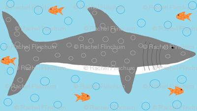 Circle Sharks