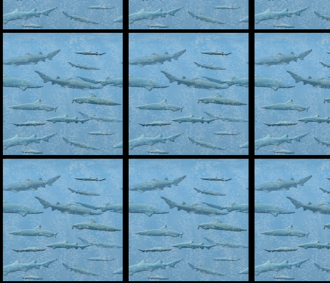 Little Shark Windows  fabric by nezumiworld on Spoonflower - custom fabric