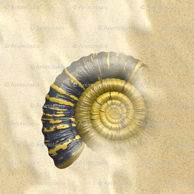 Ammonite, S