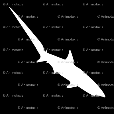 Thresher Shark, S