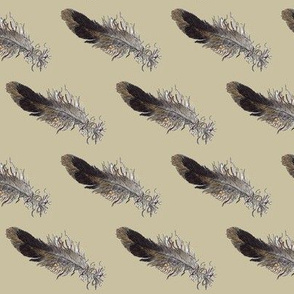 Small Bird Feather - Tan background