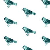 Songbird in Teal