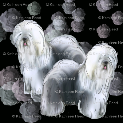 Old English Sheepdog Black Background
