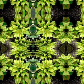 Leaves Transformed 1