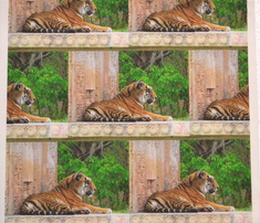 Rrone_tiger7622_comment_268826_thumb