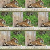 Rrone_tiger7622_shop_thumb