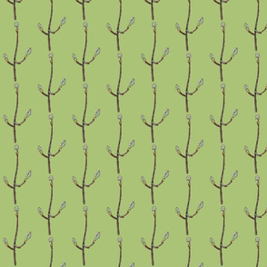 Maple Tree Buds on light green