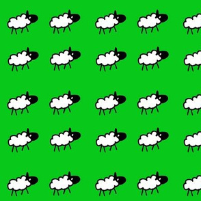 sheeps green background