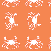 coral crabs