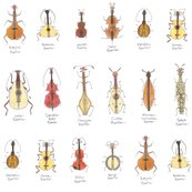 Rstringed_beetles3c_shop_thumb