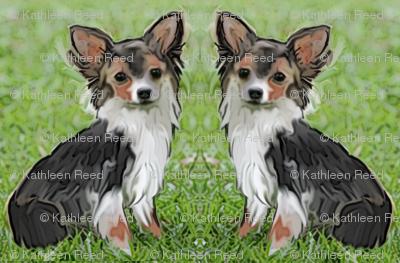 Chihuahua fabric