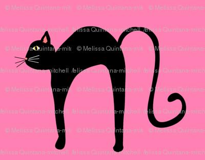Nice black kitty