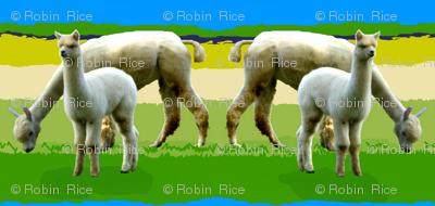 Llama Llove III